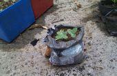 Uso de paquetes de envío para crecer las plantas