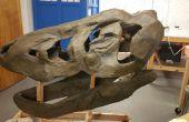 Hacer un T-Rex cráneo desde cero