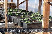 Siembra de la caja de la ventana - Cómo plantar una caja jardinera