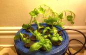 Hacer copias de la vida de sus plantas preferidas... Automagicallly