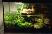 Fauna de Viviarum planta de tanque