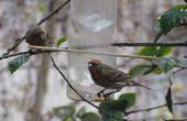 Alimentar las aves - comedero de botella de agua