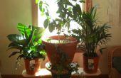 Equilibrado planta soporte