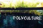 Aquaponics + Trout in the Classroom