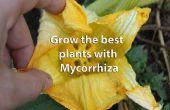 Guardar fertilizantes, su bolsillo, el mundo y obtener plantas más sanas mediante micorrizas