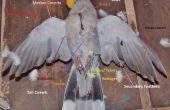 Taxidermia de aves