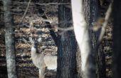 Saladero para la caza de ciervos
