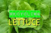 Reciclaje de lechuga