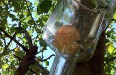 Cómo hacer crecer una manzana en una botella