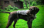 Armadura del perro