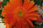 Consejos de fotografía: Tomar hermosas fotos y edición les