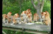 Monos hambrientos: dónde conseguir comida para menos de $10 en el muelle 9