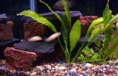 SprayPaint acuario backgrorund