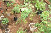 Cómo cultivar un jardín de hierbas