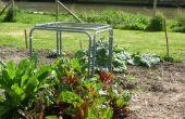 Cómo hacer una jaula de protección vegetal modular. ¿