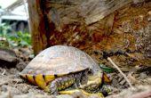 Pluma de lujo Turtle