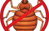 Cómo tratar y prevenir chinches [sobre todo] sin productos químicos