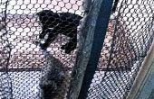 Gato portátil-segrega