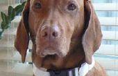 ¿Cómo hacer un Collar de perro ajustable