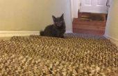 Cómo hacer un juguete de gato Diy!