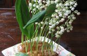 ¿Arreglos florales de papa