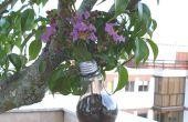 Flor del pote con lámpara