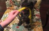 BRICOLAJE mascotas masticar juguetes