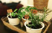 Mini jardín de hierbas de interior