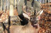 Whitetail Deer hombro Monte