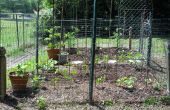 Mi jardín 2011