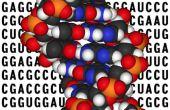 Cómo utilizar código de genoma para diseñar