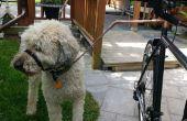 Un perrito de moto barato y seguro Walker