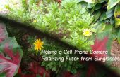 Hacer una cámara de teléfono celular polarización el filtro de las gafas de sol