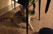 Gato y ratón jugar juguete