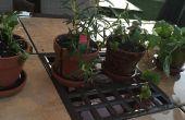 Macetas y plantar hierbas para principiantes