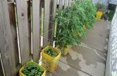 Uno mismo-riego jardín de contenedores