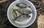 Comer especies invasoras: Zambia Pan frito Tilapia