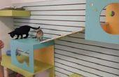 Muro de actividad del gato