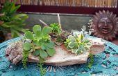 3 maneras para sujetar plantas suculentas a Driftwood para conseguir que crezcan