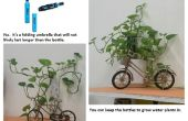 ¿Cultivo de plantas de interior?