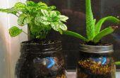 Jar las plantas