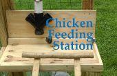 Pollo alimentación estación