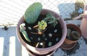 Cómo hacer un contenedor de Cactus jardín
