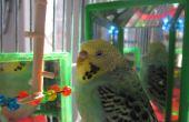 LED color cambiando pájaro el juguete!
