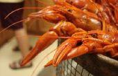 Comer especies invasoras: Cajun y sueco estilo cangrejo oxidado que hierva