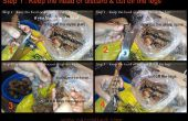 Cómo limpiar todo gambas / camarones - (corte, shell, quite la vena y limpiar)