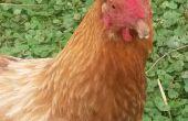 Juegos de pollo