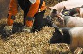 El traje de empatía de cerdo