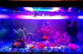Iluminación del acuario LED || Intensidad alta || Mejorar color de pescado