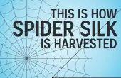 Cómo se cosecha la seda de araña